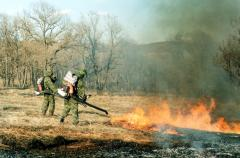 Forest Fire-Fighting
